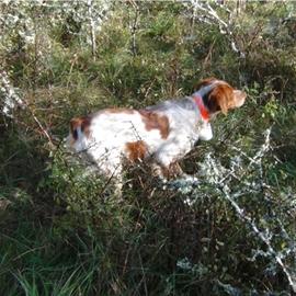 Clos des Jarousses - Pension canine, dressage, élevage chiens, chasse, épagneuls bretons
