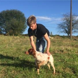 Clos des Jarousses - Dressage de chiens, épagneul breton
